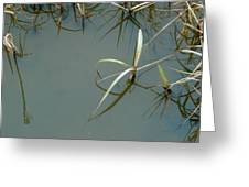 Marsh Reflections Greeting Card