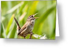 Marsh Wren Singing For Spring Greeting Card