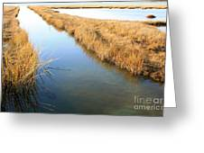 Marsh4 Greeting Card