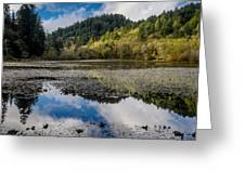 Marshall Pond In Autum Greeting Card