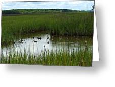 Marshlands Around Hilton Head Island Greeting Card