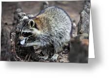 Marshmallow Muncher Greeting Card