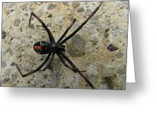 Maryland Black Widow Greeting Card