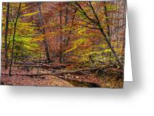 Maryland Country Roads - Autumn Colorfest No. 8 - Catoctin Mountains Frederick County Md Greeting Card