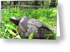 Maryland Spotted Turtle Greeting Card