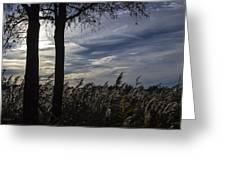 Maryland Wetland 2 Greeting Card