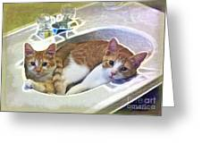 Mary's Cats Greeting Card