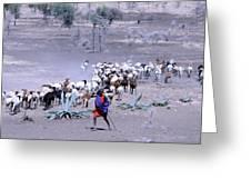 Masai Herder Boy Greeting Card