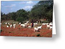 Masai Herdsman Greeting Card