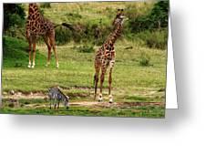 Masai Mara Wildlife Scene Greeting Card
