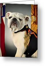 Mascot Of The United States Marine Corps Greeting Card