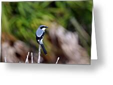 Masked Bird Greeting Card