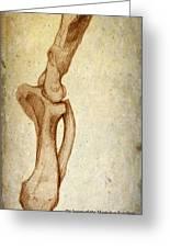 Mastodon Leg Bones Greeting Card