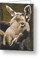 Mat-su Moose Greeting Card