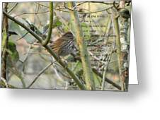 Mathew 6 Vs 26 Thrush Greeting Card