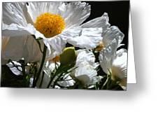 Matilija Poppies Greeting Card