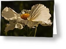 Matilija Poppy Greeting Card