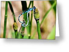 Mating Dragonflies Greeting Card