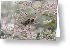Mating Grasshoppers Greeting Card