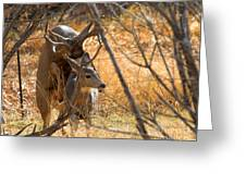 Mating Mulies Greeting Card