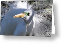 Mating Plumage Greeting Card