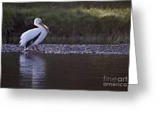 Mature Pelican   #9337 Greeting Card