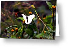 Maui Butterfly Greeting Card