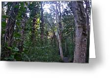Maui Forest Greeting Card