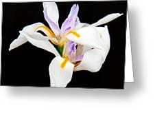 Maui Lilies On Black II Greeting Card