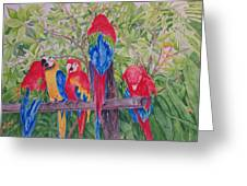 Maui Macaws Greeting Card