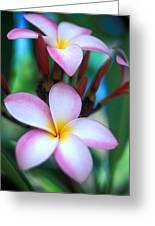 Maui Plumeria Greeting Card by Kathy Yates