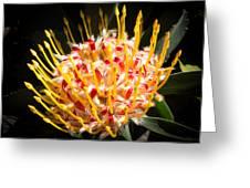 Maui Protea Greeting Card
