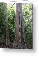 Maui Trees Greeting Card