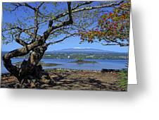 Mauna Kea Volcano Over Hilo Bay Hawaii Greeting Card by Daniel Hagerman