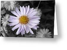 Mauve Beauty W-black And White Greeting Card