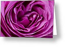 Mauve Rose Petals Greeting Card