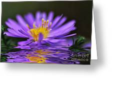 Mauve Softness And Reflections Greeting Card