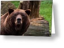 Max The Brown Bear Greeting Card