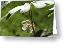May Apple Flower Greeting Card
