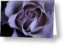 May Dreams Come True - Purple Pink Rose Closeup Flower Photograph Greeting Card