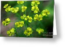 May Explosion Greeting Card by Neal Eslinger
