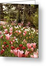 May Tulips Greeting Card