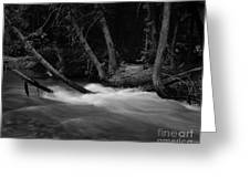 Mcdonald River   #1983 Greeting Card