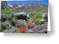Mcgee Creek Wildflowers Greeting Card