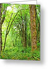 Mclane Wetlands Nature Preserve Greeting Card