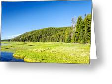 Meadow And Forest Greeting Card
