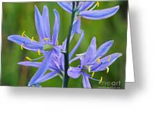 Meadow Camas Greeting Card
