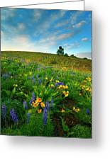 Meadow Gold Greeting Card