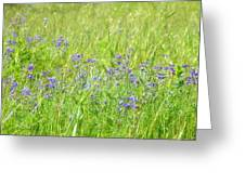 Meadow Lupine Greeting Card