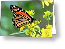 Meadow Monarch Greeting Card